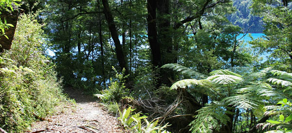 Marlborough Sounds accommodation bed and breakfast homestay
